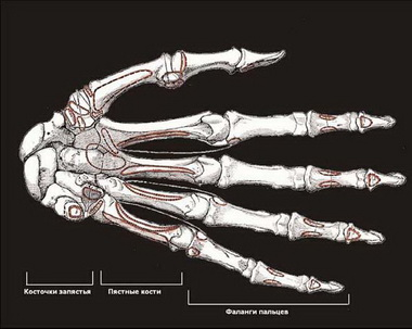 Мышцы кисти руки