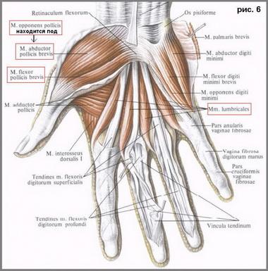 Повреждения срединного нерва