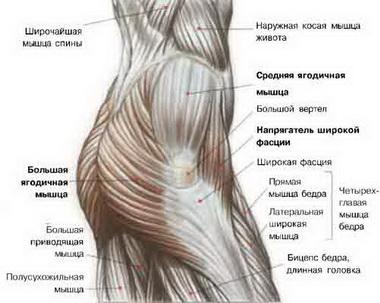 Перемещения мышц