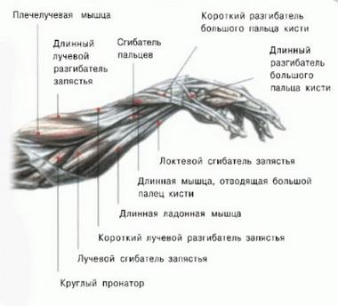 Восстановление сухожилий путем перемещения мышц