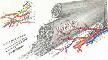 Восстановление стойких повреждений нервов