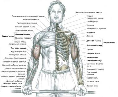 Отклонение мышцы