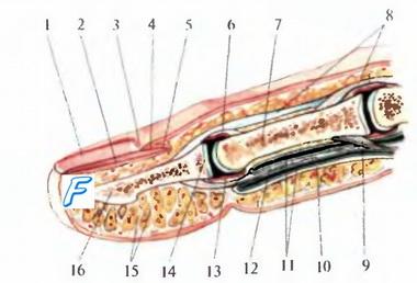 Измерение объема движения в суставах верхней конечности