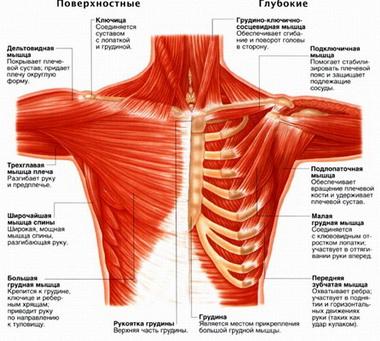 Комплексные движения в плечевом суставе и сустава-плечевого пояса