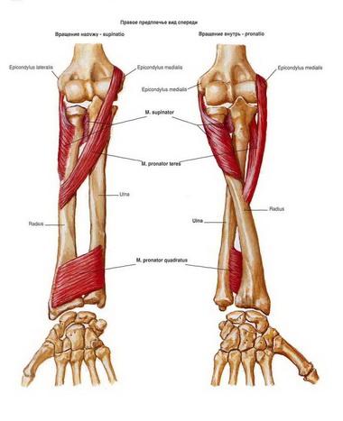 Дорсальная стабилизация кисти при отведении большого пальца в сторону ладони