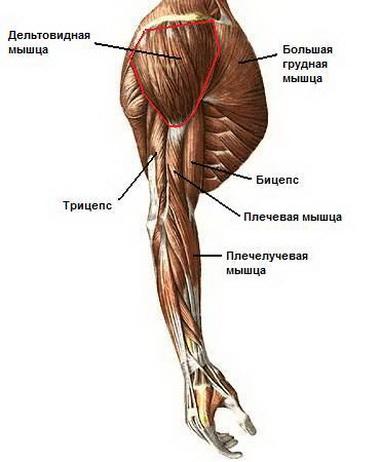 Реактивация мышц
