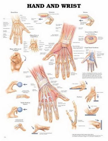 Проверка состояния поврежденных сухожилий