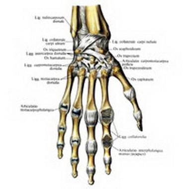 Пястно-фаланговый сустав большого пальца